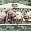 Dogpoint-Gartenbank